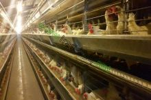 Equipping Poultry halls with the most modern and most updated automatic breeding laying hen cages and full automatic cages